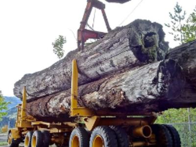 Le programme national de la forêt et du bois approuvé par décret
