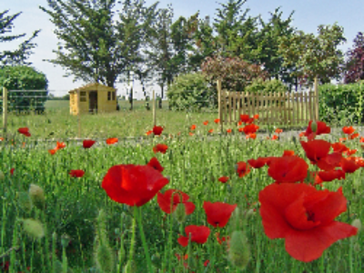Un projet de décret organise le transfert de propriété des terrains des associations dissoutes