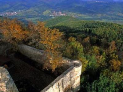 Travaux de restauration en faveur de la biodiversité dans la forêt départementale du Hohlandsbourg