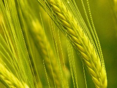 Le Groupe ECT et la Safer Ile-de-France rendent des terres à l'agriculture