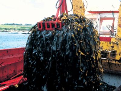 Algues vertes: l'Etat condamné à rembourser les Côtes d'Armor
