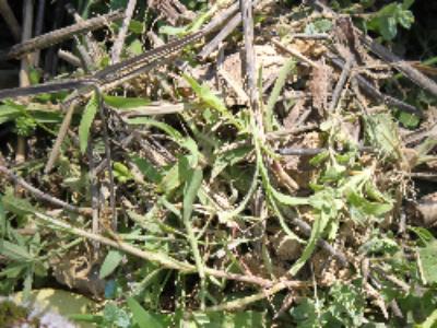 Biomasse: un rapport parlementaire préconise la territorialisation des projets