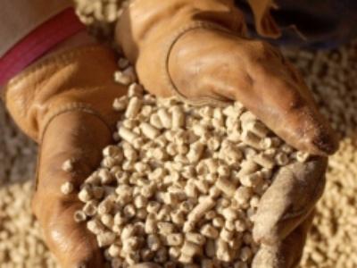 Poitou-Charentes défend une filière de soja non-OGM