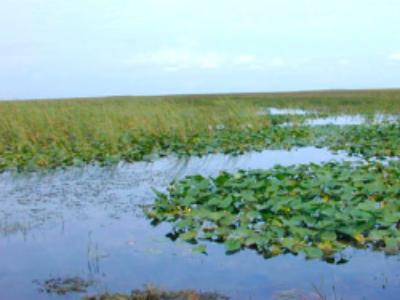 Zones humides: des pistes pour accroître l'efficience du plan d'action