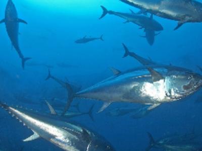 Plan d'action pour le milieu marin: les programmes de surveillance en consultation