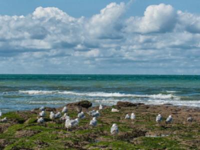 Plan d'action pour le milieu marin: la méthode de surveillance est arrêtée