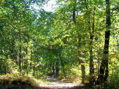 Propriétés forestières: quelles sont les conditions d'exercice des droits de préférence et de préemption des communes?