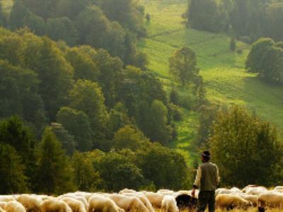 Plan régional de l'agriculture durable: un décret renforce les prérogatives des régions