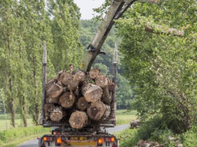 La Bretagne lance le fonds Breizh Forêt Bois