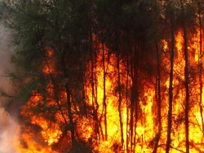 Incendies de forêt: comment mobiliser les outils de prévention et d'aménagement