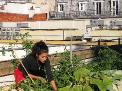 Paris va lancer deux appels à projets pour végétaliser la ville et développer l'agriculture urbaine