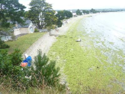 Algues vertes: bilan mitigé pour le plan 2010-2015