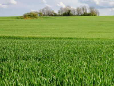 OGM: mise en place d'un nouveau mécanisme de restriction ou d'interdiction