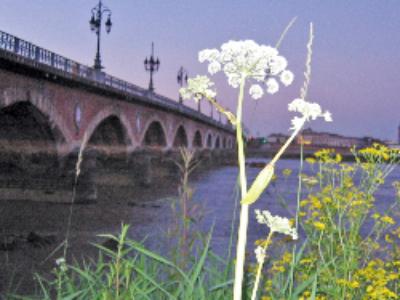 Plante & Cité et Natureparif cherchent la future capitale française de la biodiversité