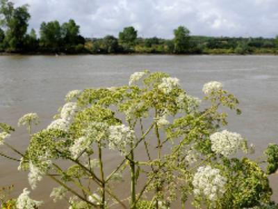 Loi biodiversité: espaces naturels sensibles et compensation écologique au menu des députés