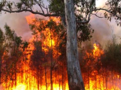 Protection des forêts contre les incendies: une loi conforte la capacité d'intervention des départements