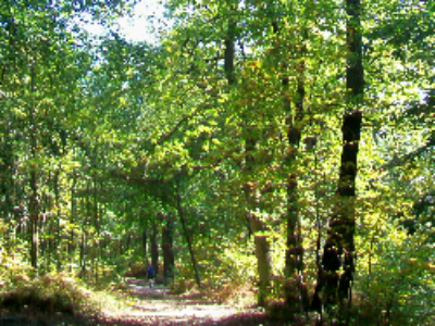 Réforme territoriale: quels impacts pour nos forêts?