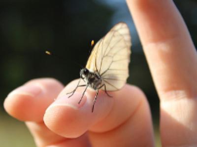 Zones prioritaires pour la biodiversité: le décret en consultation