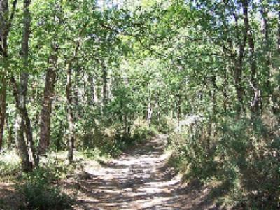 Un projet de décret autorise les travaux miniers dans les forêts de protection