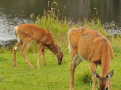Le décret relatif aux sites naturels de compensation est paru