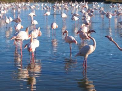 Naissance des comités régionaux de la biodiversité