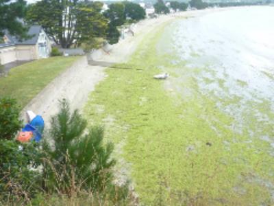 Bretagne, tourisme et algues vertes: une équation pas définitivement perdante