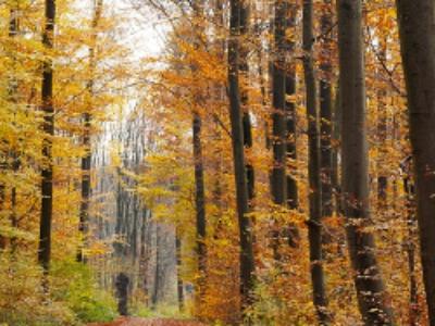 Bois et forêts: les nouveaux périmètres de l'évaluation environnementale à la loupe