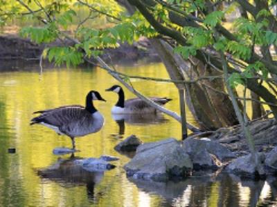 Compensation écologique: CDC Biodiversité explore de nouveaux leviers