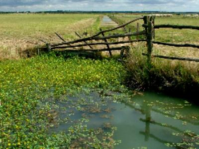 Fiscalité des zones humides: l'exonération de la taxe foncière sur le non-bâti remise au goût du jour