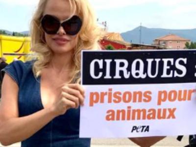 Pamela Anderson alerte les maires de France