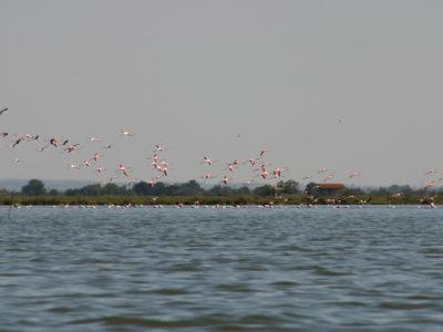 Parcs naturels régionaux: retour aux fondamentaux après le chamboule-tout des réformes