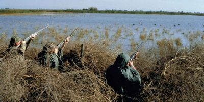 Fusion de l'Agence française de la biodiversité (AFB) et de l'Office national de la chasse et de la faune sauvage (ONCFS)