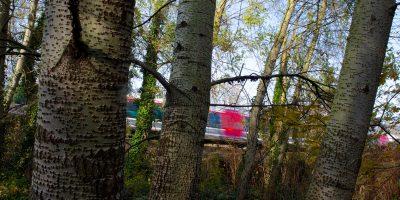 """Petites lignes ferroviaires:""""C'est l'arbre qui cache la forêt"""", pour Patrick Jeantet (SNCF Réseau)"""