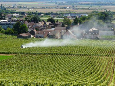 Fronde anti-pesticides: cinq villes veulent comblerles trous dansla raquettede la loi Labbé