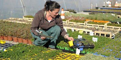 Espaces verts: une enquête cible les collectivités