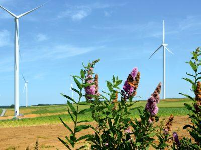 Energies renouvelables: la crise n'explique pas à elle seule leur recul